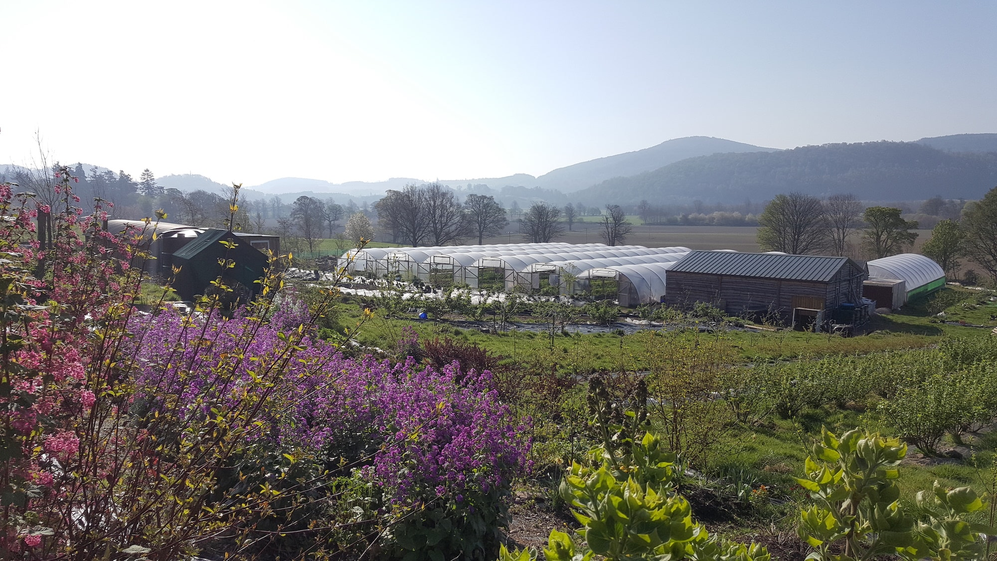 Crops & Polytunnels